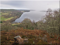 NH6789 : Dornoch Firth from the viewpoint in Ledmore Wood by Julian Paren
