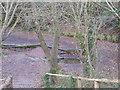 TQ4164 : Spring that feeds the ponds on Keston Common by Sarah Charlesworth