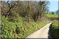 SX1354 : Lane to Penpoll by Derek Harper