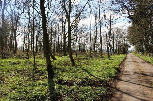 The lane to Brockhampton in early April
