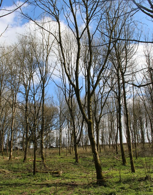 Woodland at Clayhill in early April