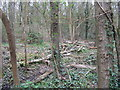 TL2971 : Cut wood in The Thicket by M J Richardson