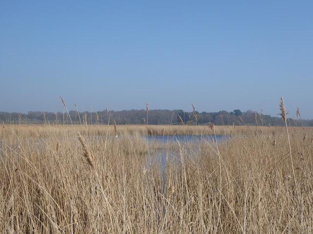 Westwood Marshes