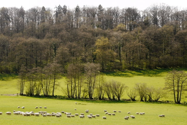 Sheep pasture and Nurdens Wood