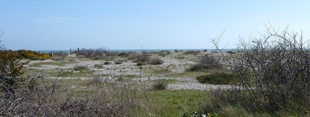 Sand, shingle and scrubland; Pagham