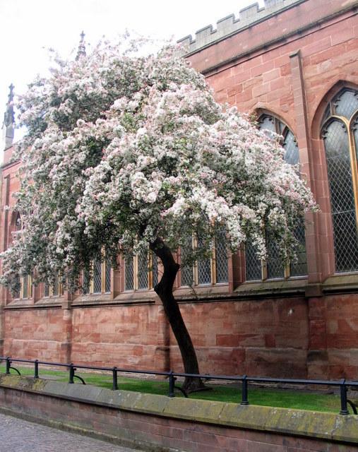 Blossom by Holy Trinity Church