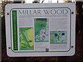 SU9094 : Display Board at Millar Wood near Potter's Cross by David Hillas