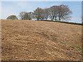 SE1339 : Flattened bracken above Crooks Farm by Stephen Craven