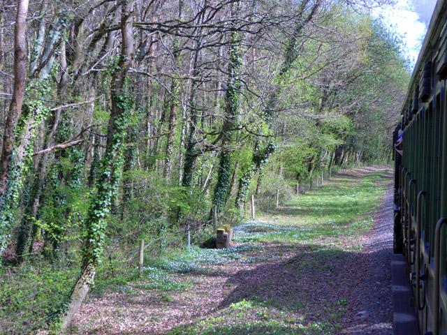 Railway through Rowlands Wood