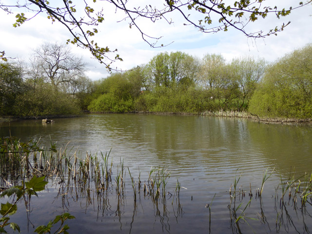 Pond, Chelynch