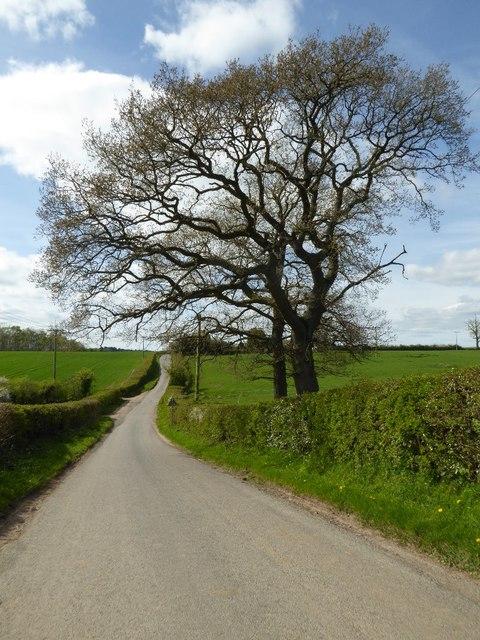 Trees beside Brockhill Lane