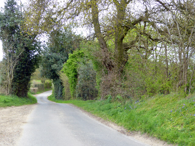 Lane north-east from Blackmore End