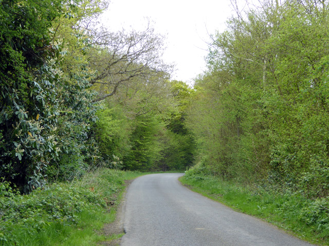 Lane by Tredgell's Wood
