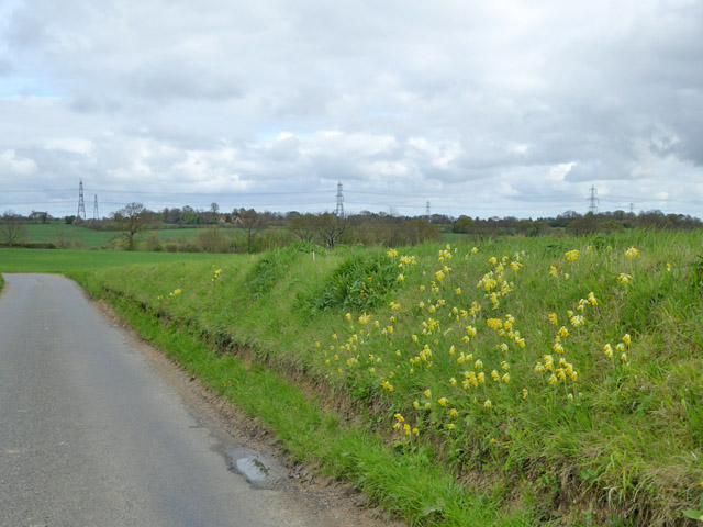 Lane bank with cowslips