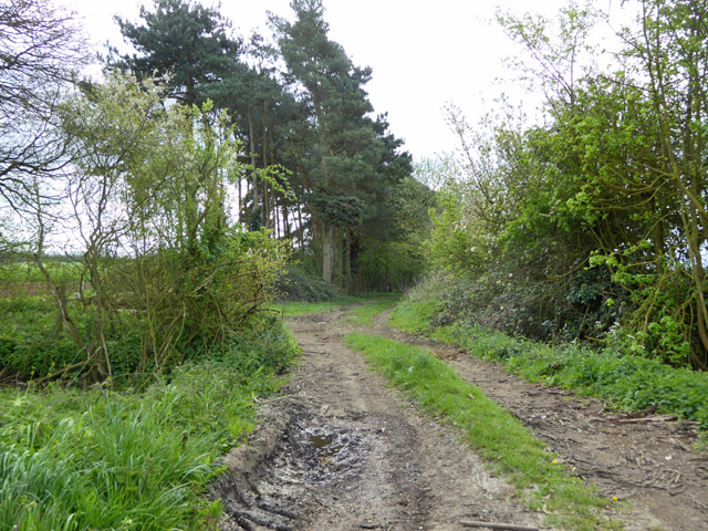 Track south from Great Yeldham Road