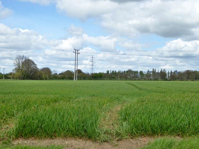 Wheat field south of Mendlesham