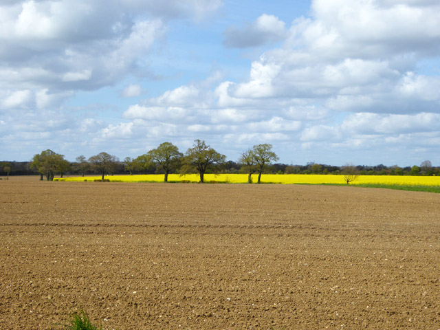 Brown and yellow fields