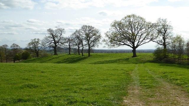 Trees in a field beside Bentley Lane