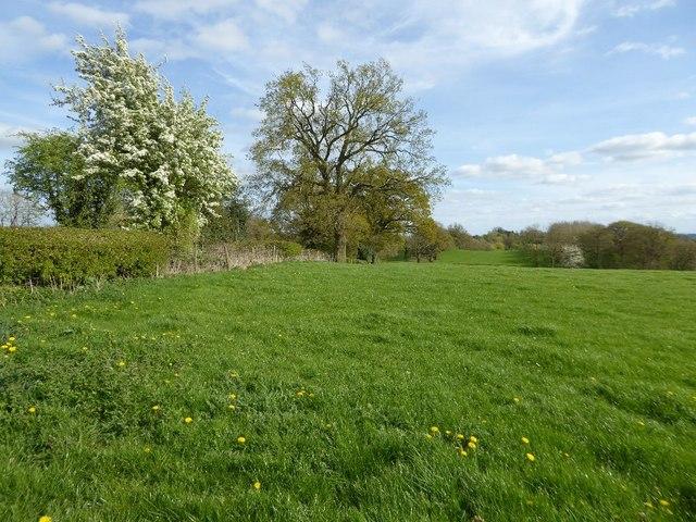 Field beside Bentley Lane