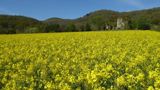 Oilseed rape and Little Malvern Priory