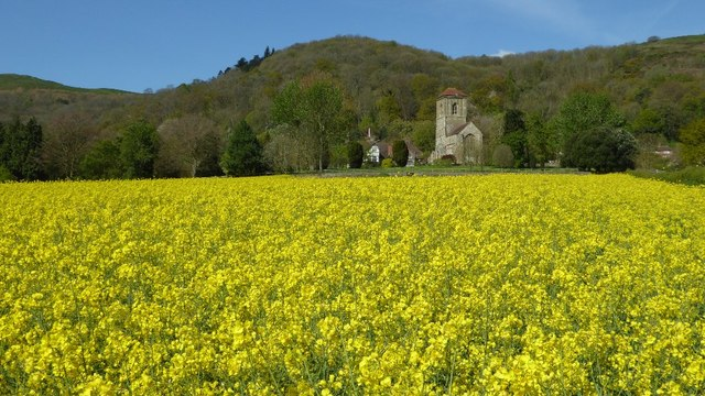Oilseed rape and Little Malvern Prior