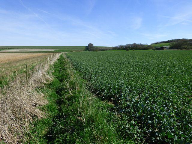 Farmland, Manningford