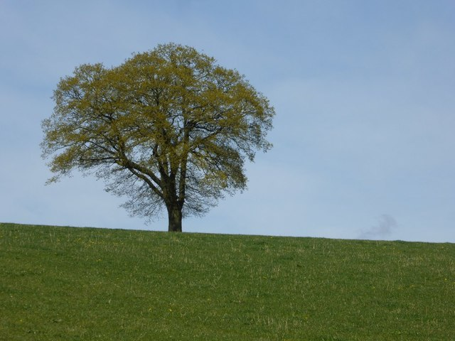 Oak tree on the horizon