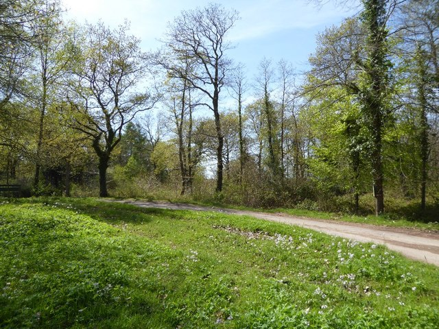 Spring in Haugh Wood