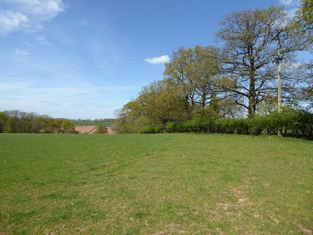 Field beside Holly Grove