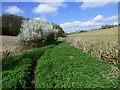 SU9091 : Farmland, Chepping Wycombe by Andrew Smith