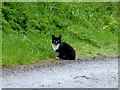 H4378 : Cat along Tattynagole Road by Kenneth  Allen