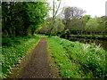 H4772 : Pathway, Campsie, Omagh by Kenneth  Allen