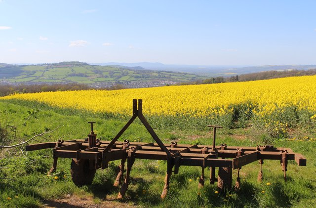 Oil seed rape growing above Winchcombe
