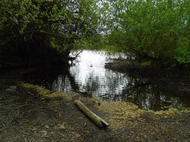 River in drought 8 - Broad Colney lake