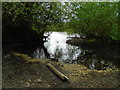TL1803 : River in drought 8 - Broad Colney lake by John Webb