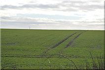 TL3858 : Tramlines in wheat by N Chadwick