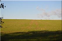 TL3958 : Tramlines by N Chadwick