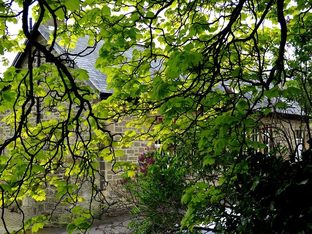 Below the Jubilee Tree, Heddon on the Wall