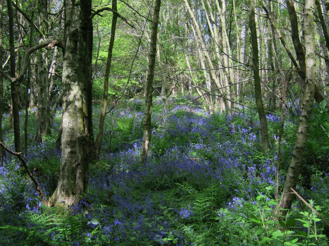 Footland Wood