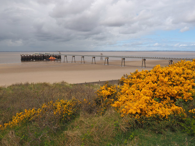 Gorse Bushes and Spurn Jetty