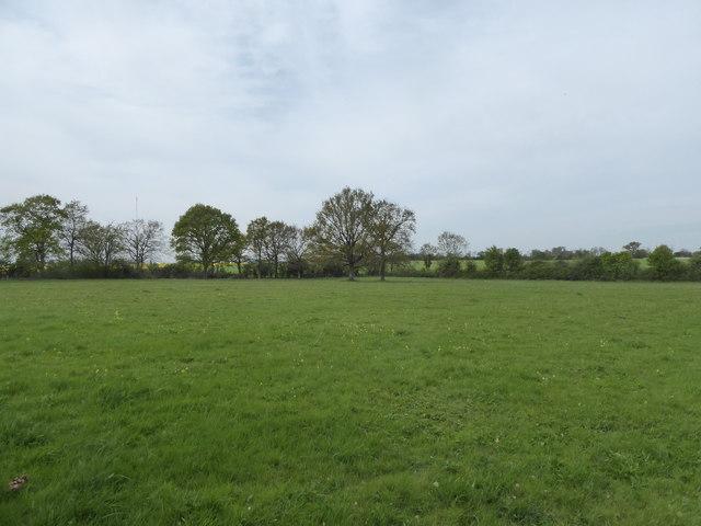 Mickfield Meadow