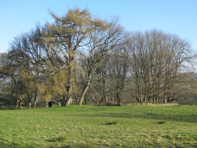 Pasture and copse near Shilburn