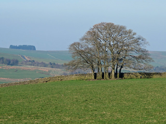 Farmland west of Leadgate Bank