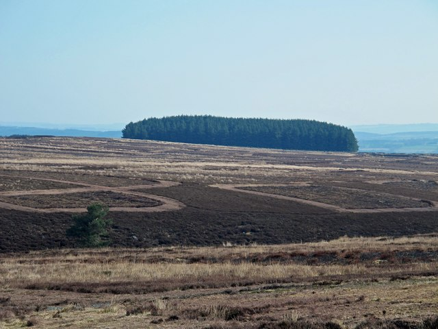 Moorland around the valley of Lawsley Sike