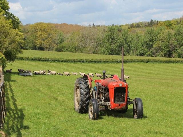 Massey Ferguson near Bardown Farm