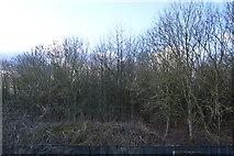 TL4158 : Woodland in winter by N Chadwick