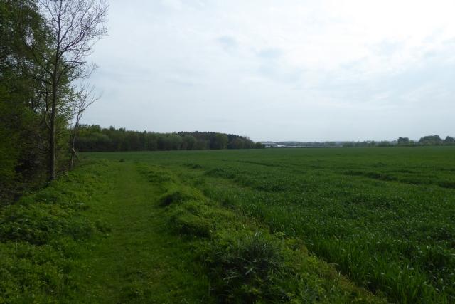 Bridleway at Swinnow