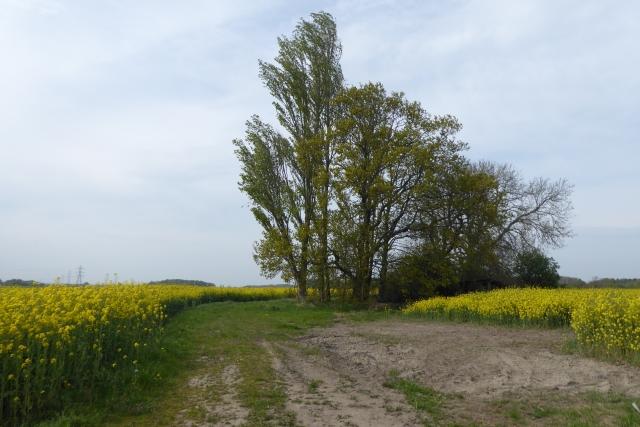 Track near Moss Carrs Farm