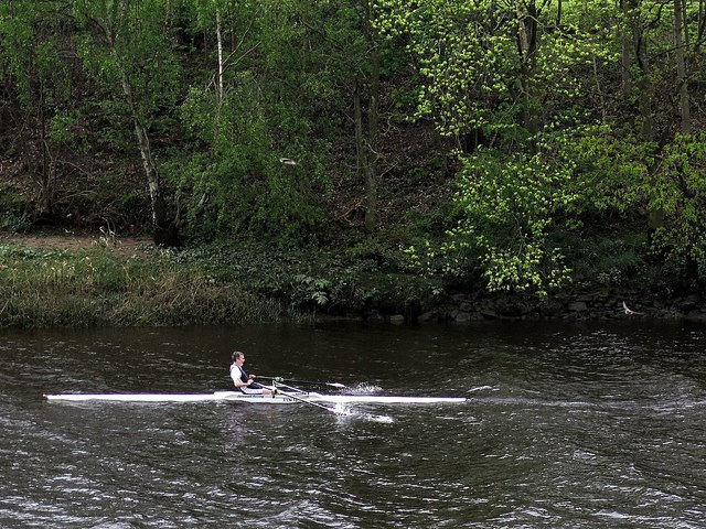 Single scull and two martins