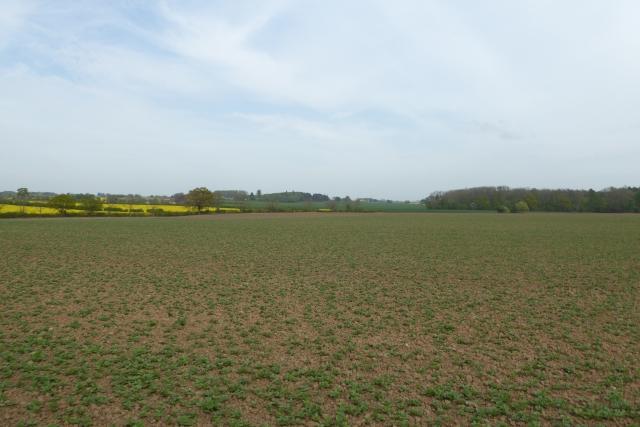 Towards Walton Wood